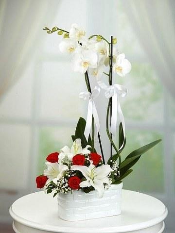 Orkide Lilyum ve Güller