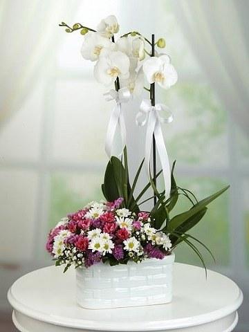 Orkide ve Rengarenk Papatyalar