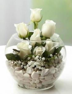 fanus camda beyazgüller