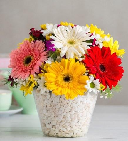 Gerbera ve Kır Çiçekleri Şöleni